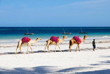 Camels at Diani Beach - Galu Beach - in Kenya, Africa Wall mural