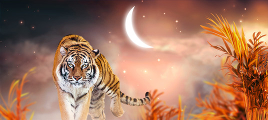 Fantasy tiger walking in jungles with palm trees on fabulous magical night sky background with crescent moon, shining stars and clouds, fairy tale valley, fantastic artistic wide panoramic banner