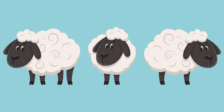Set of sheeps in different poses. Farm animals in cartoon style.