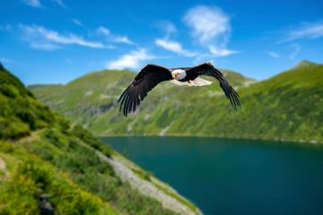 Adler fliegt in großer Höhe mit ausgebreiteten Flügeln an einem sonnigen Tag in den Bergen über einen See. Fototapete