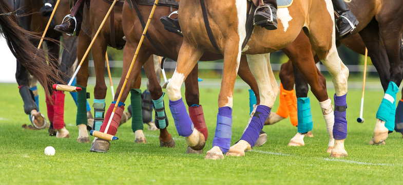 Polo horses run at the game. Big plan. Horses legs wrapped with bandages to protect against hammer kick. Ball took off in front of player. beginning of a game