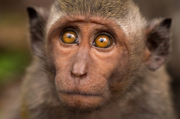 Foto op Canvas Aap close-up of a young monkey