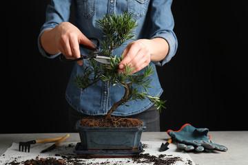 Printed kitchen splashbacks Bonsai Woman trimming Japanese bonsai plant, closeup. Creating zen atmosphere at home