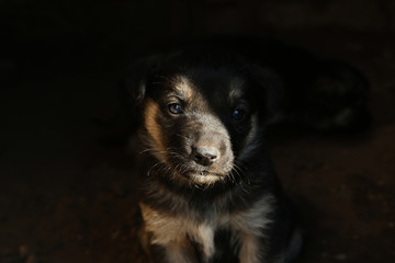 Furry black stray puppy outdoors, closeup. Baby animal
