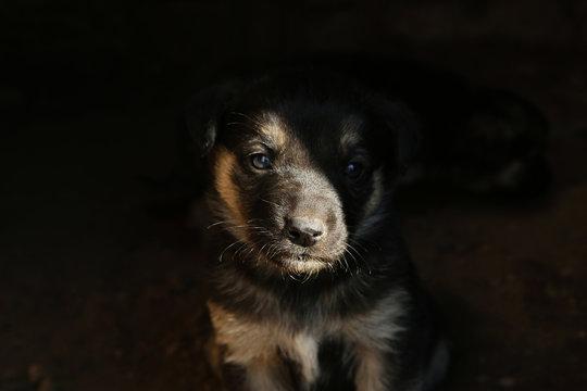 Furry black stray puppy outdoors, closeup. Baby animal