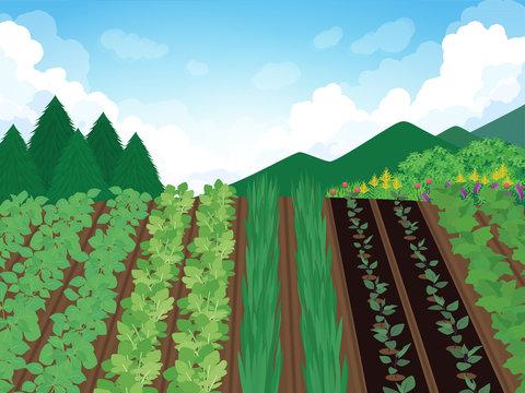 畑と山の風景イラスト
