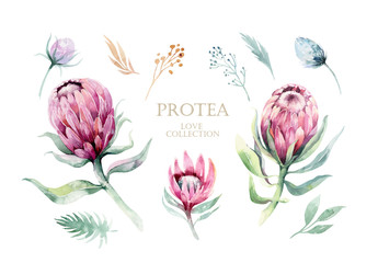Watercolor vector protea elements set. tropical leaves. Hand drawn illustration Fototapete