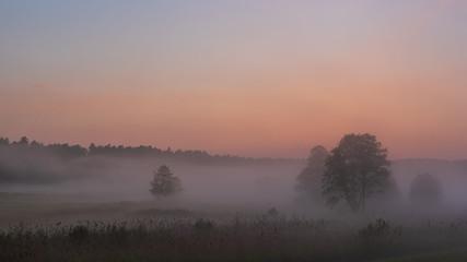 Mgły po burzy unoszące się nad śródleśną polaną