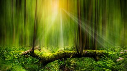 Fototapeta Bajkowe drzewo obraz