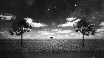 Fototapete - Lake and trees. Black and white