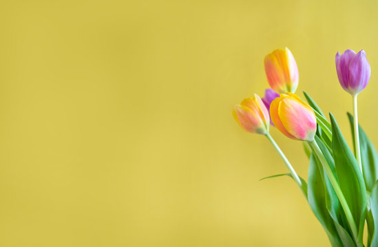 Yellow, red and purple bouquet of tulips on yellow background with copy space, mother's day card or birthday card