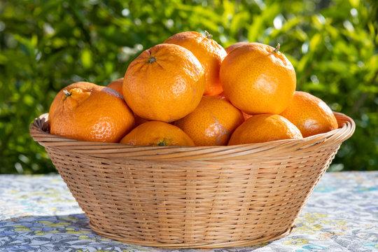 Cestino di mandarini appena colti