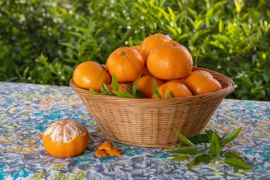 Cestino di mandarini appena colti su tavola