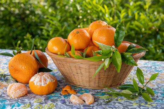 Cestino di mandarini appena colti su tavola all'aperto