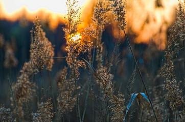 Sucha trawa i słońce. - fototapety na wymiar