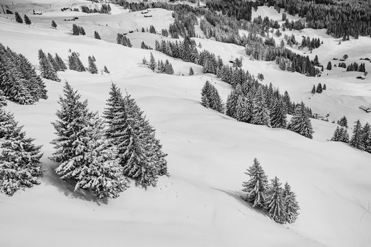 Snowy Trees in the Hills
