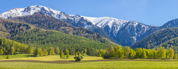 Wall Mural - Beautiful bright landscape. Summer greens of forests and snow on mountain tops.