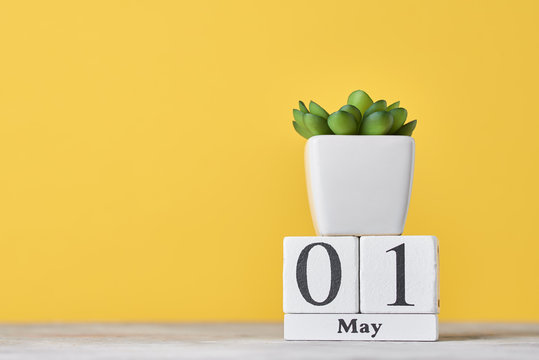 Wooden block calendar with date May 1 and succulent plant in the pot on yellow background. Labor Day concept