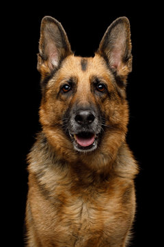 160 Best Large Dog No Background Images Stock Photos Vectors Adobe Stock