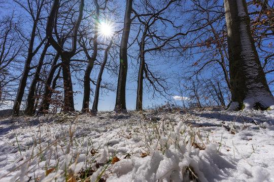 Verschneider Wald  im März