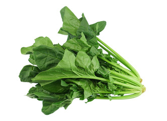 Wall Mural - close up on fresh spinach isolated on white background