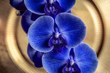 Blue orchids macro on a golden background