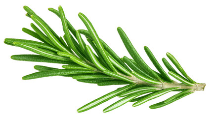 rosemary isolated on white background, clipping path, full depth of field Wall mural
