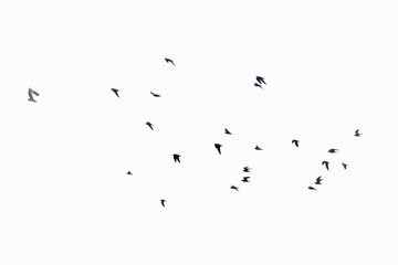 Tuinposter Vogel birds flying in the sky, isolated with white background, clipping path