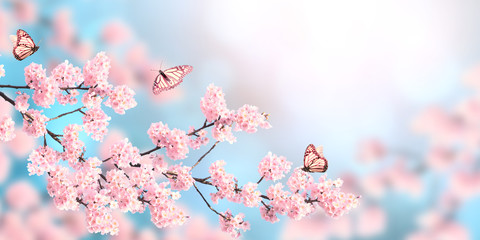 Wall Mural - Horizontal spring banner with sakura flowers and three butterflies