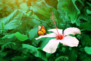 Fototapete - Beautiful tropical scene with exotical flower and butterfly