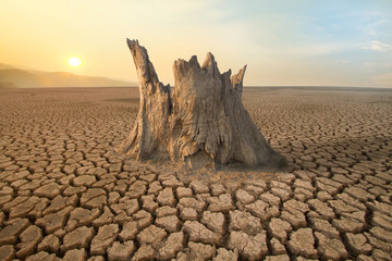 The big tree dead on middle dried lake with hot and clear weather on background metaphor climate change and rainforest or environment damage from global warming.