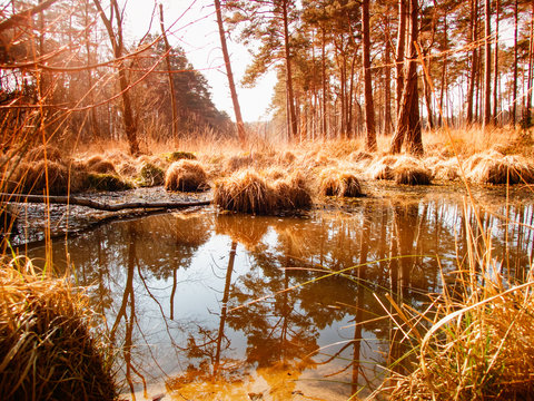 Brown Forest Pool, Swinley Forest, Bracknell. UK