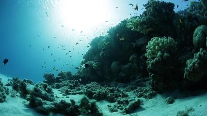 Fototapete - Loopable footage of the vivid coral reef from underwater