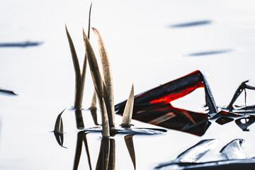 Schilf im Wasser abstrakt