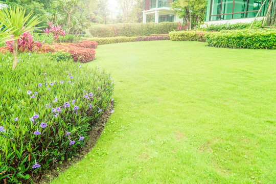 The sunshine in the evening shines through the trees down to the lawn of the front of the house beautifully, green lawn, front lawn for the background, designed a beautiful shady landscape garden.