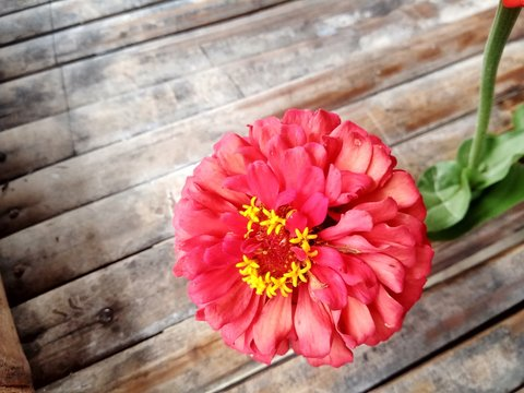 red flower on wooden background