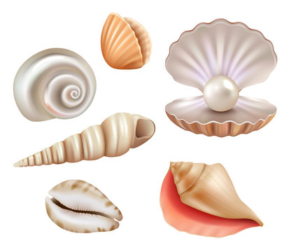 Open seashells. Luxury pearls and marine objects from sea or ocean vector realistic set. Mollusk and shell, seashell with jewelry, precious illustration
