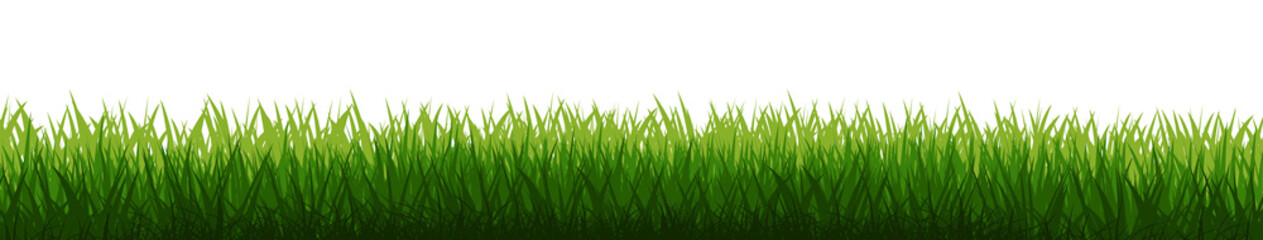 Grass field background vector. Green dense juicy lawn grass. Spring Summer. Isolated. Grassland landscape. Meadow. Horizontal Herbs Garden. Wall mural