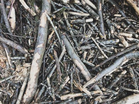 Nahaufnahme von Waldboden in der Schweiz - Äste auf einem Stapel am Boden im Wald