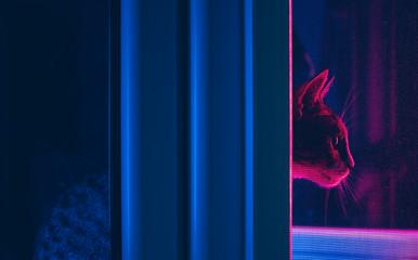 Cat under fluorescent lights