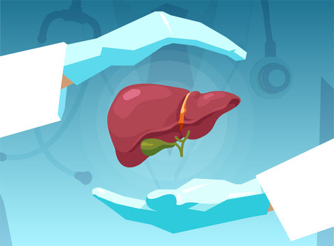 Vector of a doctor protecting human liver with his hands.