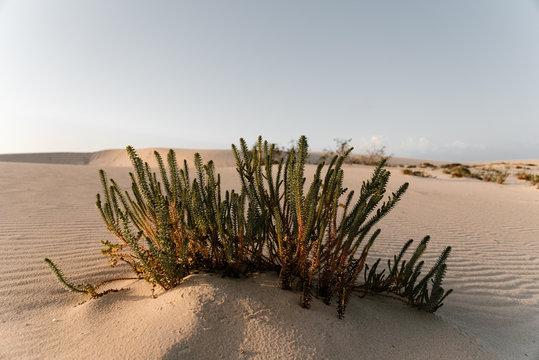 Beautiful green plants growing in desert.