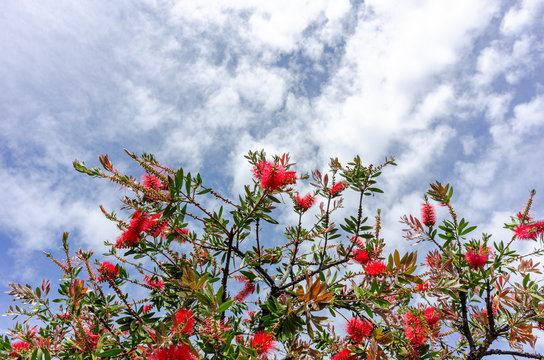 Red flowers blooming in the sunlight, against a cloudy blue sky