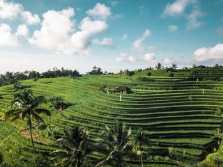 Aerial view of rice fields in Penebel, Bali, Indonesia Fototapete