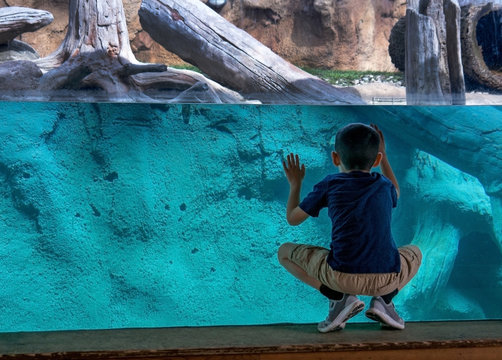 A young boy looks through glass at a zoo exhibit