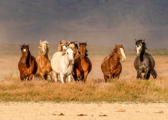 Photo sur Plexiglas Chevaux Wild horses in desert of Utah