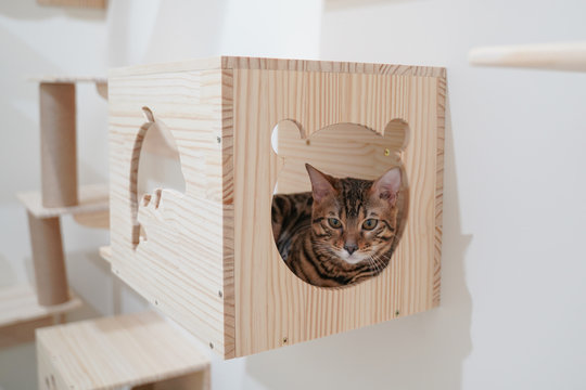 Bengal cat sitting in the wall hanging wooden box for pet climbing activity
