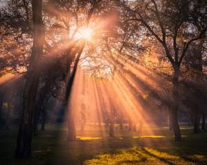 Zelfklevend Fotobehang Diepbruine magical sunlights forest trees landscape