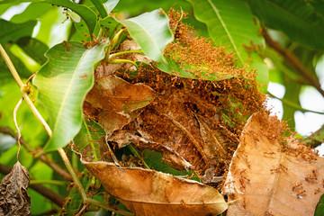 Ameisen Nest