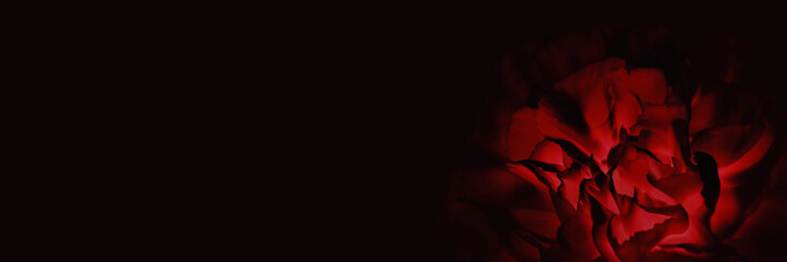 Red rose, peony or clove flower on the dark background. Condolence card. Empty place for a text. Fotomurales